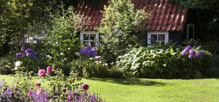 Begleitpflanzen - Rosen - Titel - Garten - Franks kleiner Garten