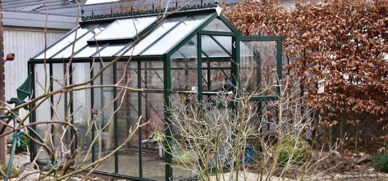 Gewächsshaus - Hoklartherm - Winter - Februar - Lüften - Franks kleiner Garten