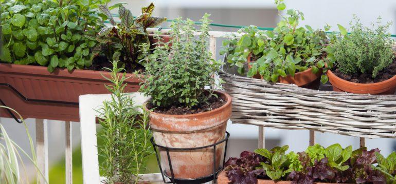 Kräuter - Kräutergarten - Balkon - Franks kleiner Garten