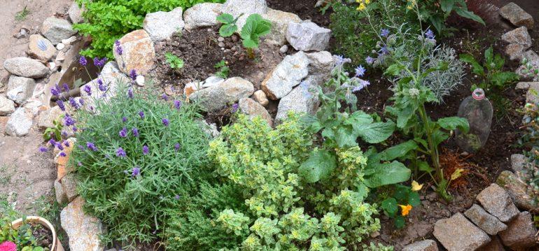 Kräutergarten - Kräuterspirale - Kräuter - Franks kleiner Garten