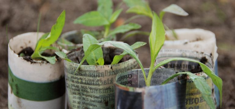 Pot Maker – Garten - Anzucht - Franks kleiner Garten