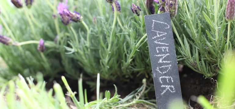 Schiefertafeln Cottage Garden – Antik-Look - Praktisch - Edel - mit Stift - lifestyle - Franks kleiner Garten