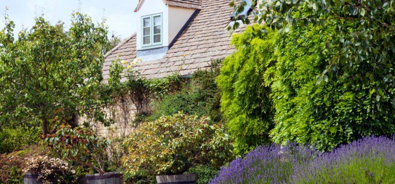 Garten - Fehler vermeiden - Lavendel - Haus - Sommer - Franks kleiner Garten