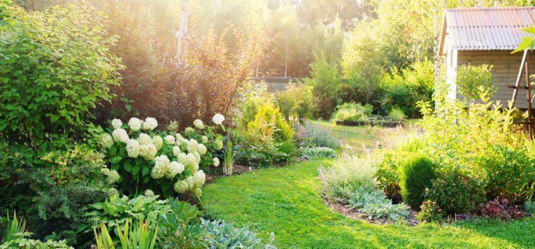 Garten - Fehler vermeiden - Sommer - Rasen - Beet - Franks kleiner Garten