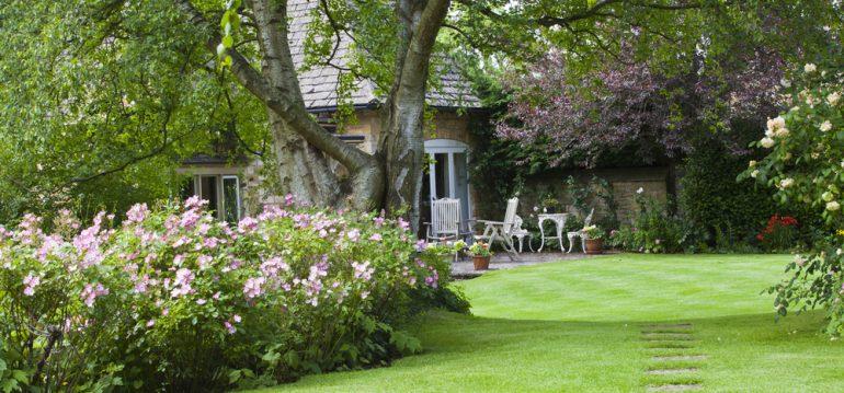 Garten - Planung - Fehler vermeiden - Baum - Rasen - Sommer - Franks kleiner Garten