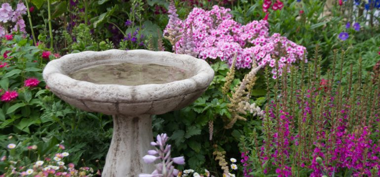 Garten - Planung - Fehler vermeiden - Brunnen - Vogelbad - Beet - Sommer - Franks kleiner Garten