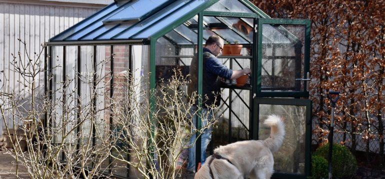 Gewächshaus - Hoklartherm - März - Bruno - Franks kleiner Garten