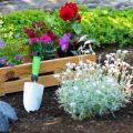 Traumbeet - Beetplanung - Beet - Franks kleiner Garten