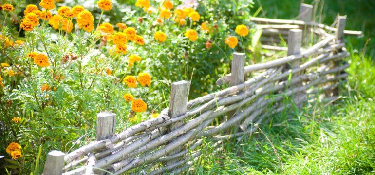 Traumbeet - Beetplanung - Einfassung - Franks kleiner Garten