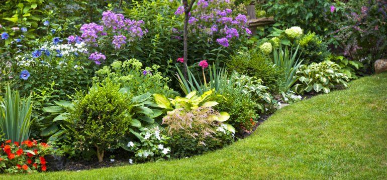 Traumbeet - Beetplanung- Franks kleiner Garten