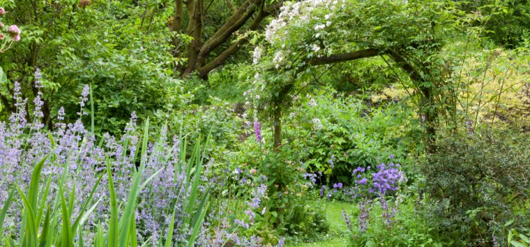 Traumbeet - Beetplanung - Frühling - Franks kleiner Garten