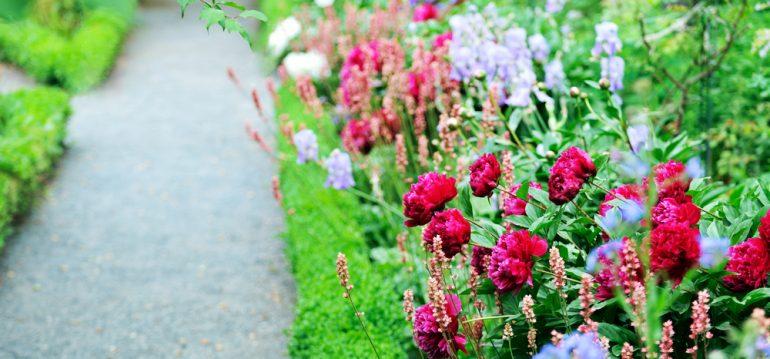 Traumbeet - Beetplanung - Pfingstrosen - Frühling - Franks kleiner Garten