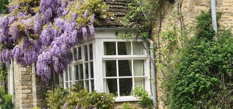 Duftgarten - Blütenpracht - Juni - Blauregen - Franks kleiner Garten