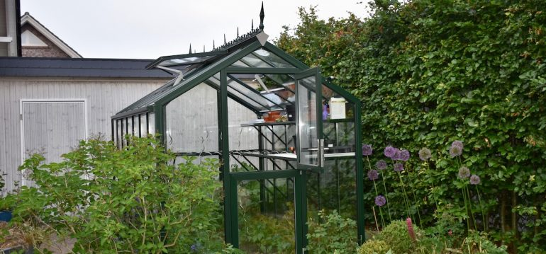 Gewächshaus - Hoklarterm - Sommer - Tomaten - Franks kleiner Garten