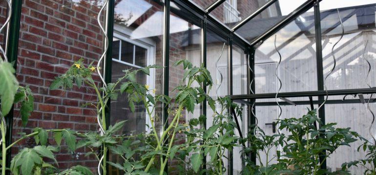 Gewächshaus - Hoklartherm - Tomaten - Pfanzstäbe - Franks kleiner Garten
