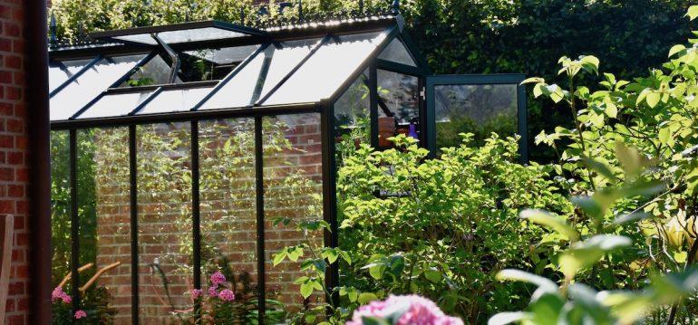Gewächshaus - Hoklartherm - Sommer - Spiegelung - Hitze - Franks kleiner Garten