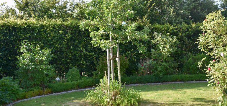 iMow - Stihl - Mähroboter - Rasen - Blumeninsel - Franks kleiner Garten
