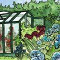 Gewächshaus - Hoklartherm - August - Illustration - Franks kleiner Garten