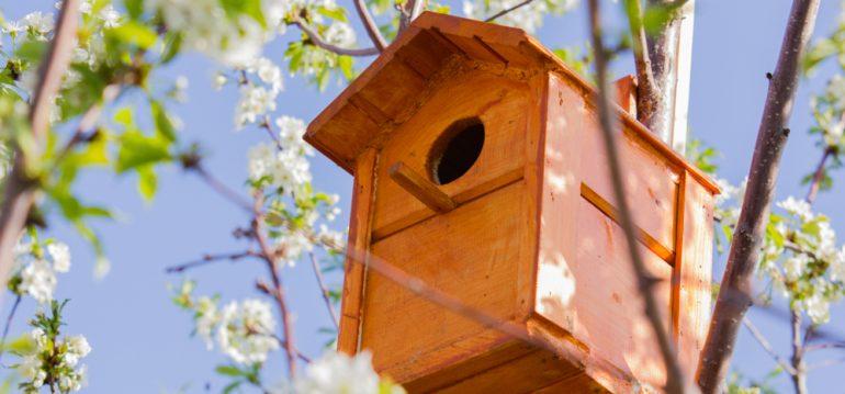 Biogarten - Nistplatz - Vogel - Baum - Frühling - Franks kleiner Garten