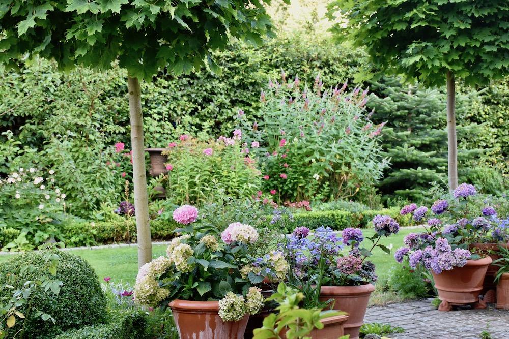 Garten - Gartenplanung - günstige Pflanzen - Pflanzentipps - Gartenansicht - Franks kleiner Garten
