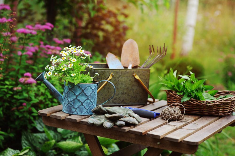 Garten - Gartentipps - Pflanzen - Pflanzentipps - günstige Pflanzen - Franks kleiner Garten
