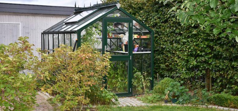 Hoklartherm - Gewächshaus - September - Franks kleiner Garten