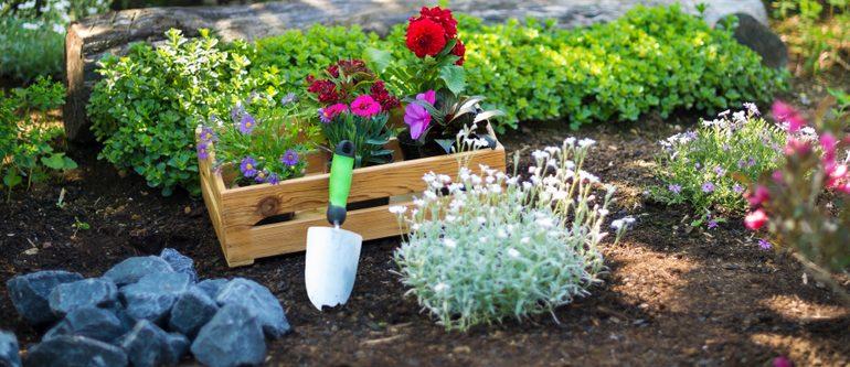 Garten - Gartenanfänger - Gartentipps - Tipps - Beetplanung - Franks kleiner Garten