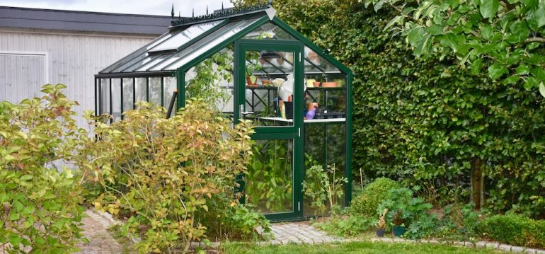 Gewächshaus - Hoklartherm - Kübelpflanzen - Oktober - Herbst - Franks kleiner Garten