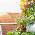 Gewächshaus - Hoklartherm - Kübelpflanzen - Titel - Franks kleiner Garten