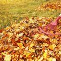 Mähroboter - Stihl - iMow - Rasen - Hebst - Rasenpflege – Franks kleiner Garten