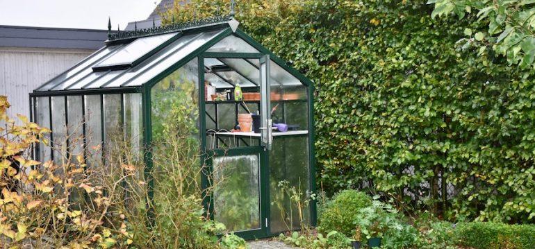 Gewächshaus - Hoklartherm - bio-top - t-line - November - Herbst - Franks kleiner Garten