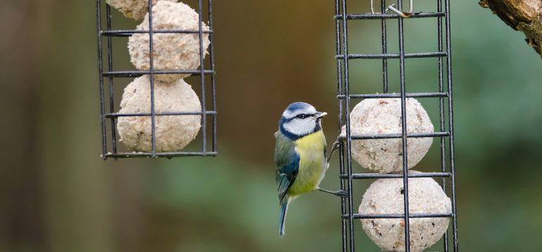 Wildvögel - Winter - Füttern - Vogelfutter - Futterstation - Franks kleiner Garten