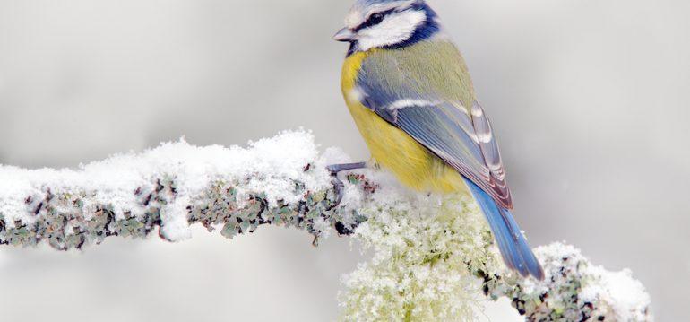 Wildvögel - Winter - Vogelfutter - Füttern - Franks kleiner Garten