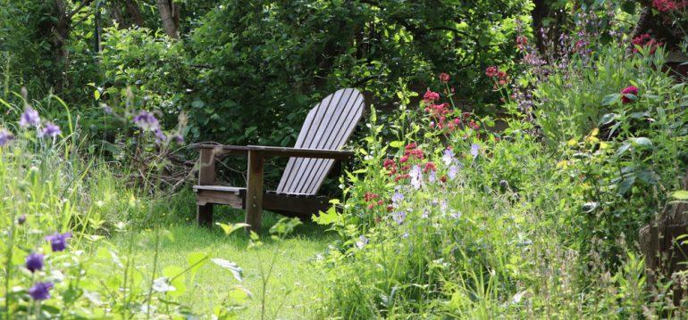 Garten - Bienen - Naturnaher Garten - Naturgarten - Franks kleiner Garten