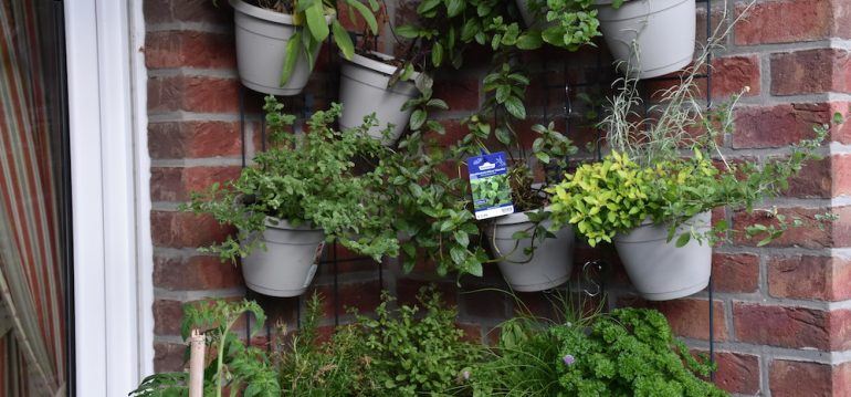 Kräuter - Vertical Gardening - Wandgarten - Terrasse - Franks kleiner Garten