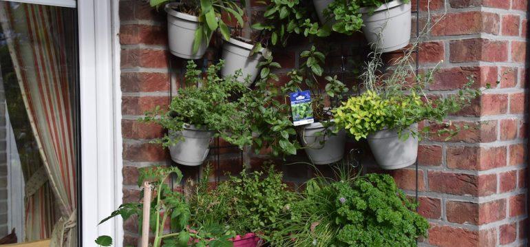 Kräuter - Wandgarten - Vertikal Gardening -Kräutergarten - Sommer - Franks kleiner Garten