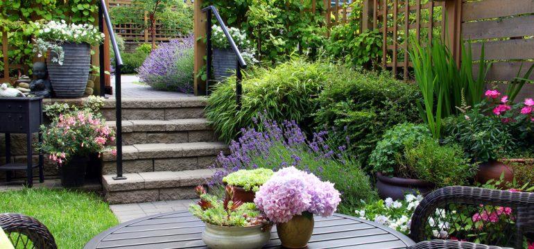Gartenplanung - kleiner Garten - Terrasse - Treppe - Lavende - Hortensien - Rasen - Franks kleiner Garten
