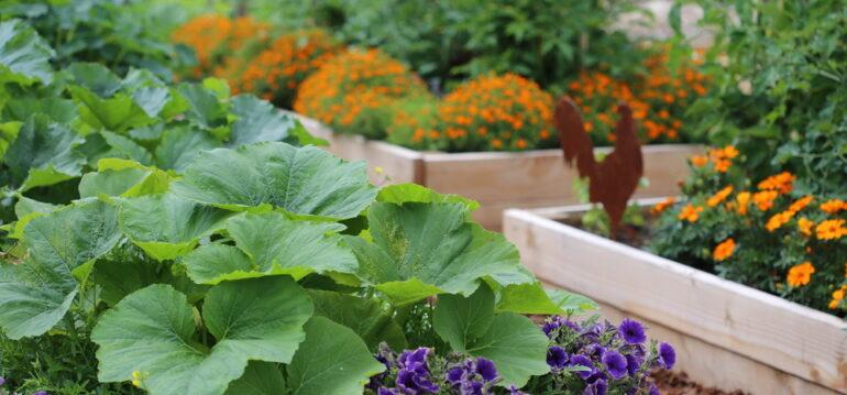Hochbeet - Rückenschmerzen - Befplanzen - Gartenideen - Urban Gardening - Franks kleiner Garten