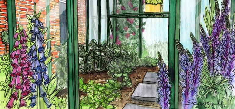 Gewächshaus - Juni - Fingerhut - Lupinen - Illustration - Franks kleiner Garten