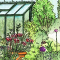 Gewächshaus - Illustration - Juli - 2020 - Franks kleiner Garten