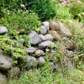 Glühwürmchen - Freisenwall - Setinmauer - Fugen - Ritzen - Franks kleiner Garten