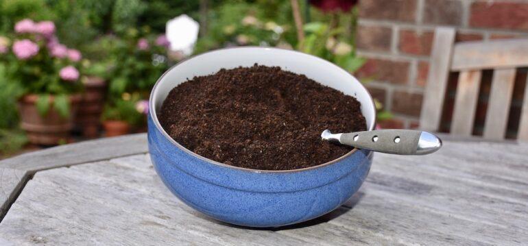 Kaffeesatz - Superdünger - DIY - Sparfuchs - Franks kleiner Garten