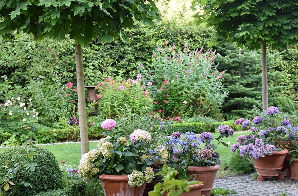 Terrasse   Hortensien   Teracotta   Töpfe   Sommer   Franks kleiner Garten   Willkommen in ...