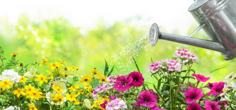 Wasser - Garten - Beet - Blumen - Franks kleiner Garten