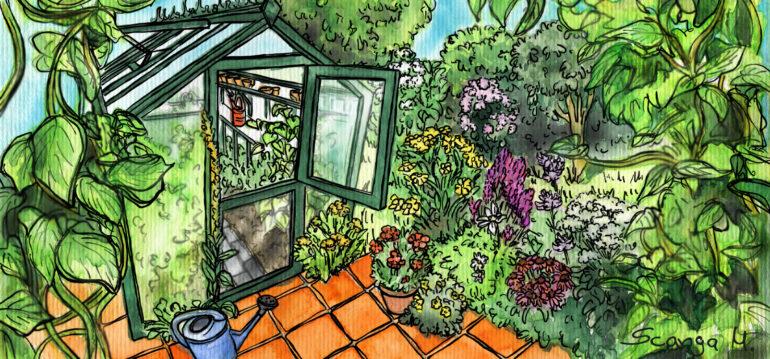 Gewächshaus - Illustration - August 2020 - Franks kleiner Garten