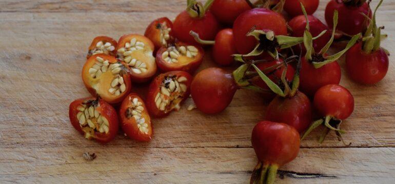 Hagebutten - August - Kartoffelrose - Entkernen - Nüsse - Franks kleiner Garten