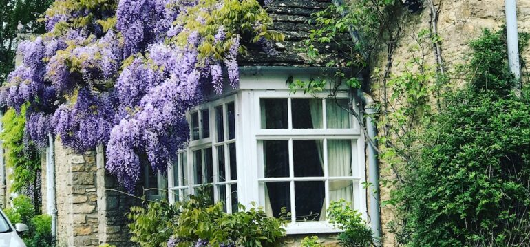 England - Blauregen - September - Franks kleiner Garten