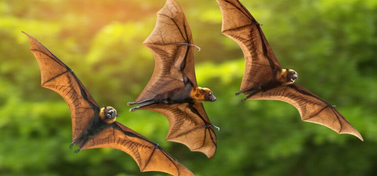 Fledermäuse - Fledermaus - Trio - Grün - Artenschutz - Franks kleiner Garten