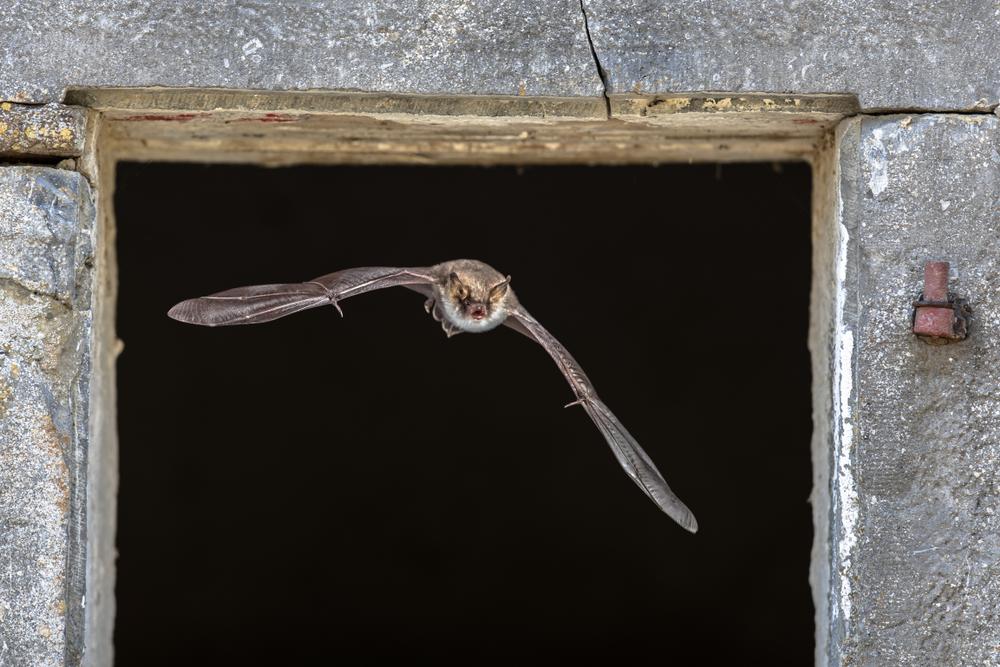 Fledermäuse Anlocken