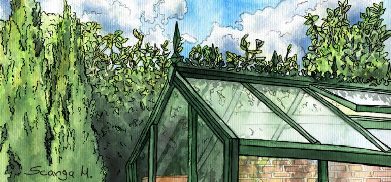 Illustration - September - Gewächshaus - Franks kleiner Garten